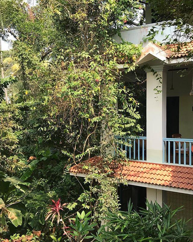 Our junglehouse ❤️ #india #splendour