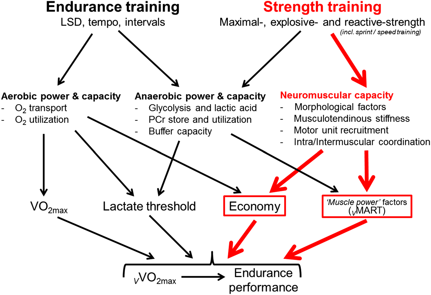 Image taken from: Beattie K, Kenny IC, Lyons M, Carson BP (2014) The effect of strength training on performance in endurance athletes.  Sports Med  44: 845-865.