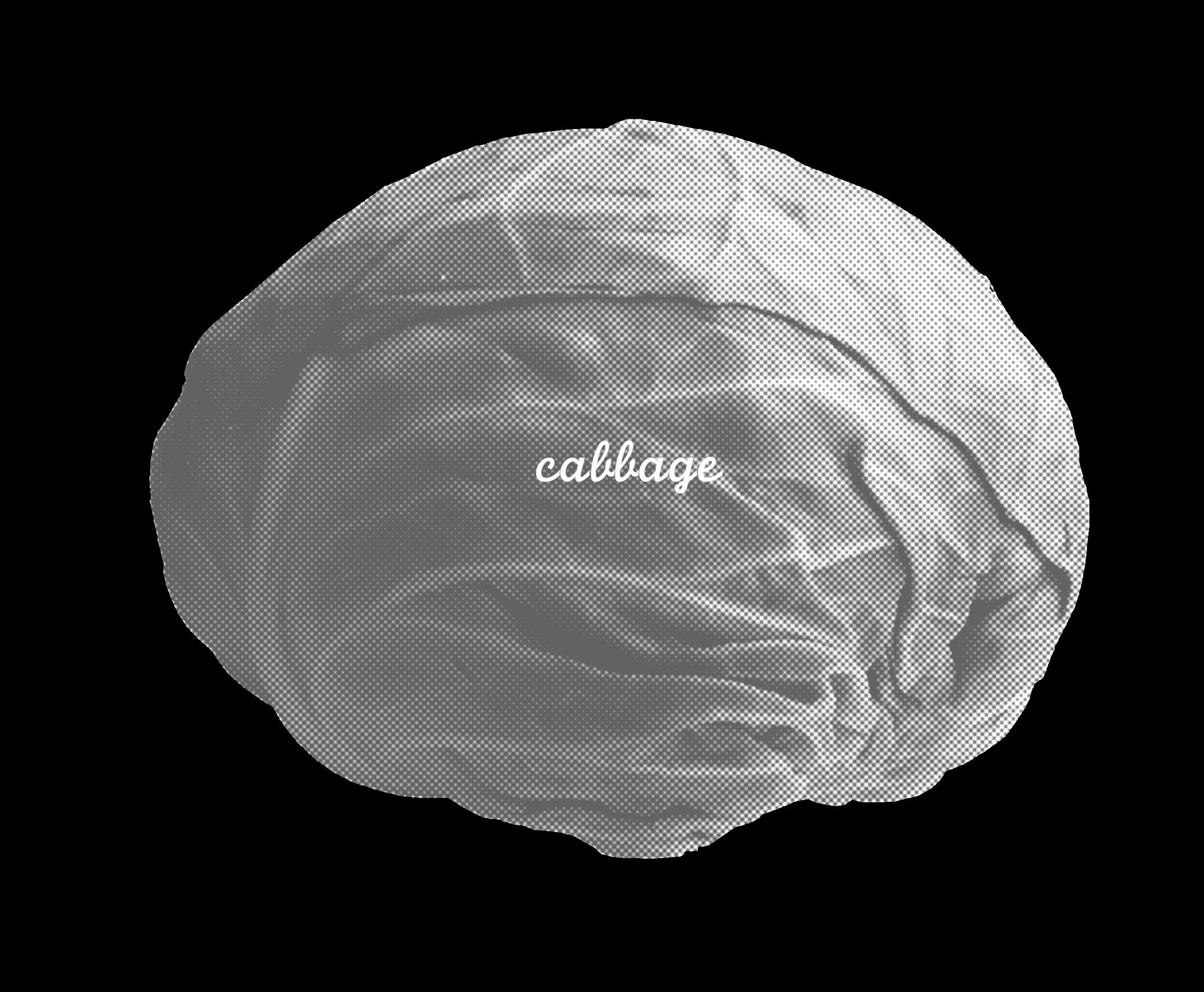cabbagenu copy.png