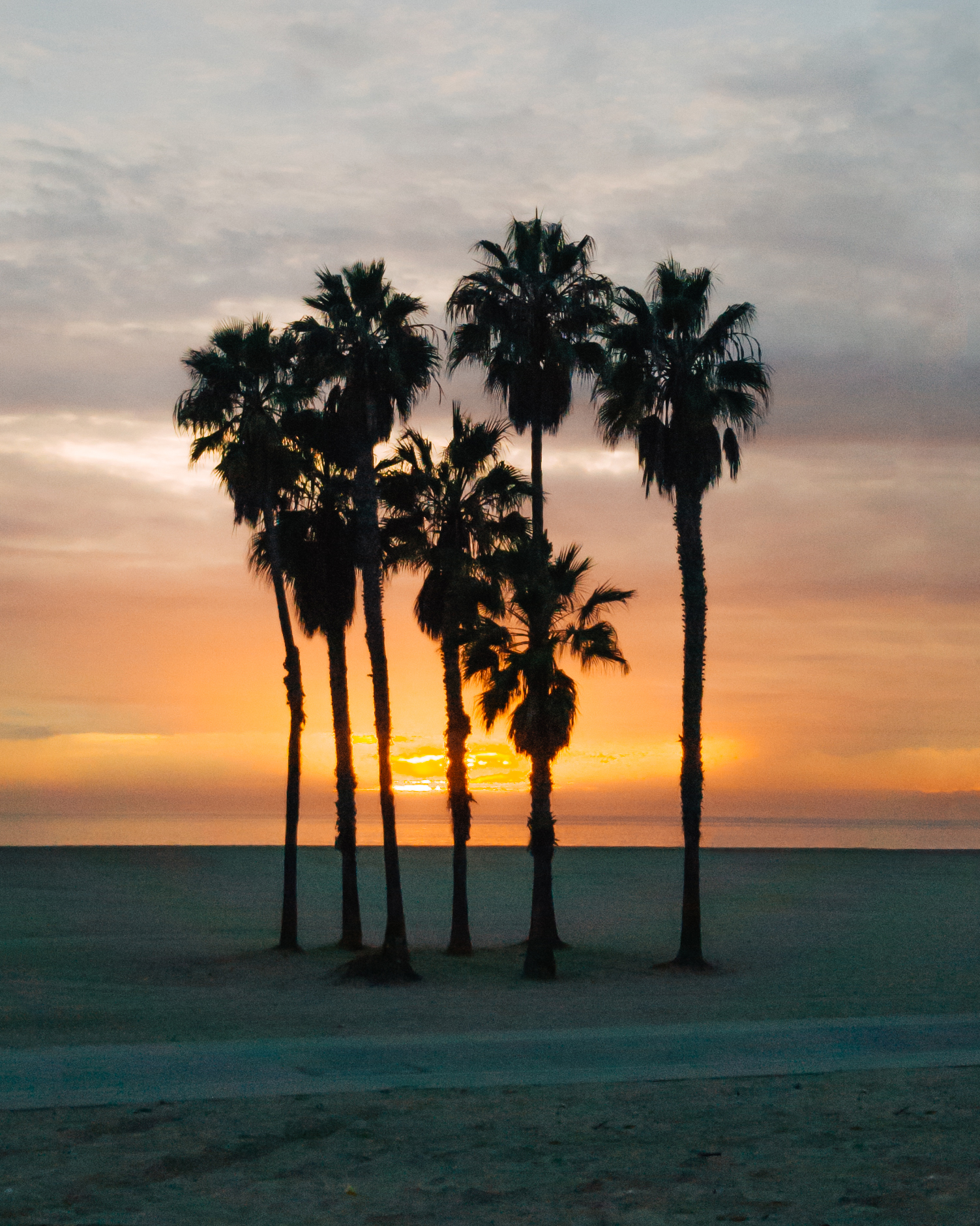 10_SunsetPalmTrees.jpg