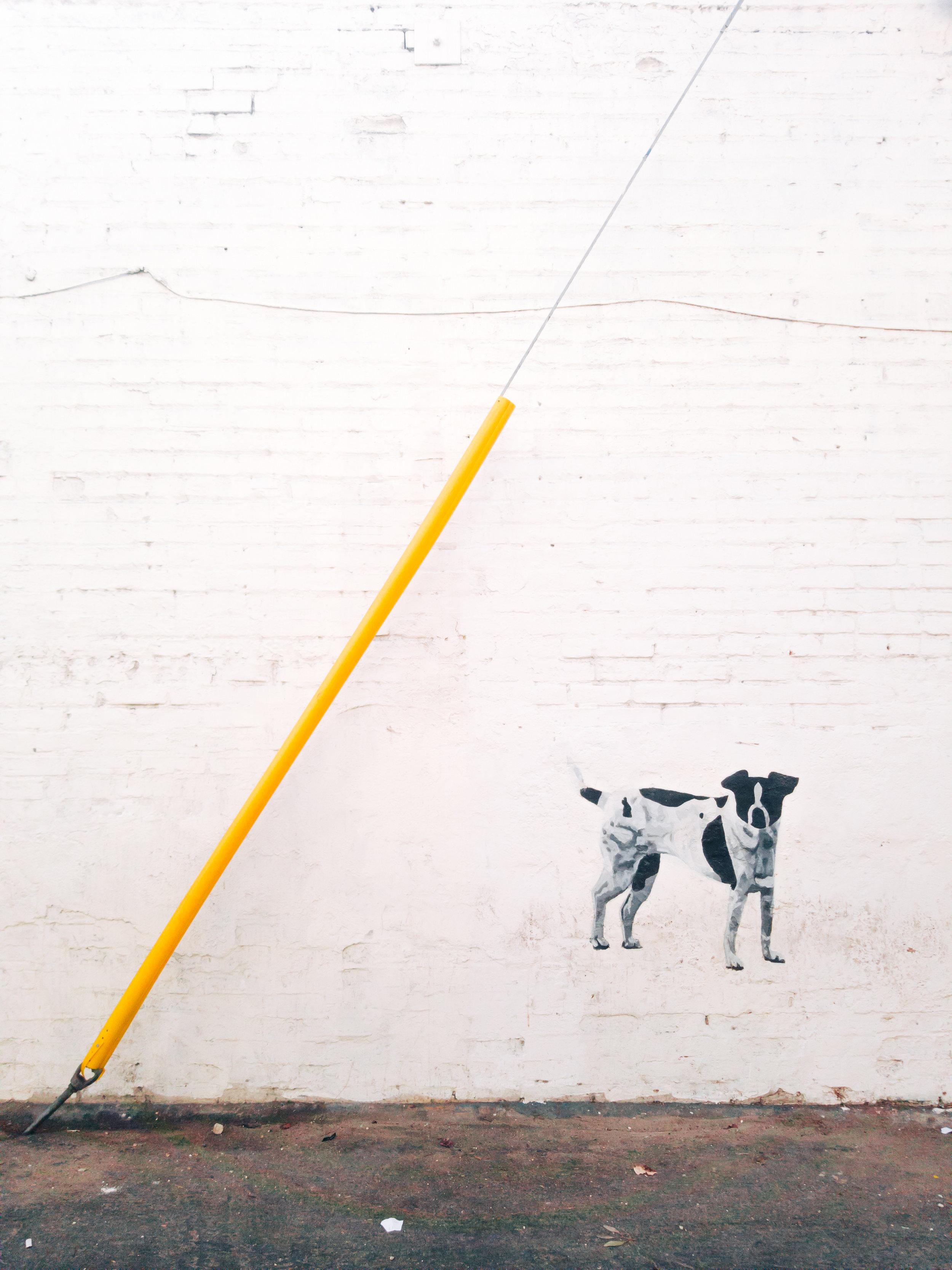 18_Grafiti_Dog.jpg