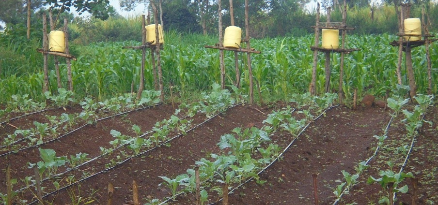 These jerricans (yellow buckets) are part of our simple irrigation system improvised by our orphans and staff