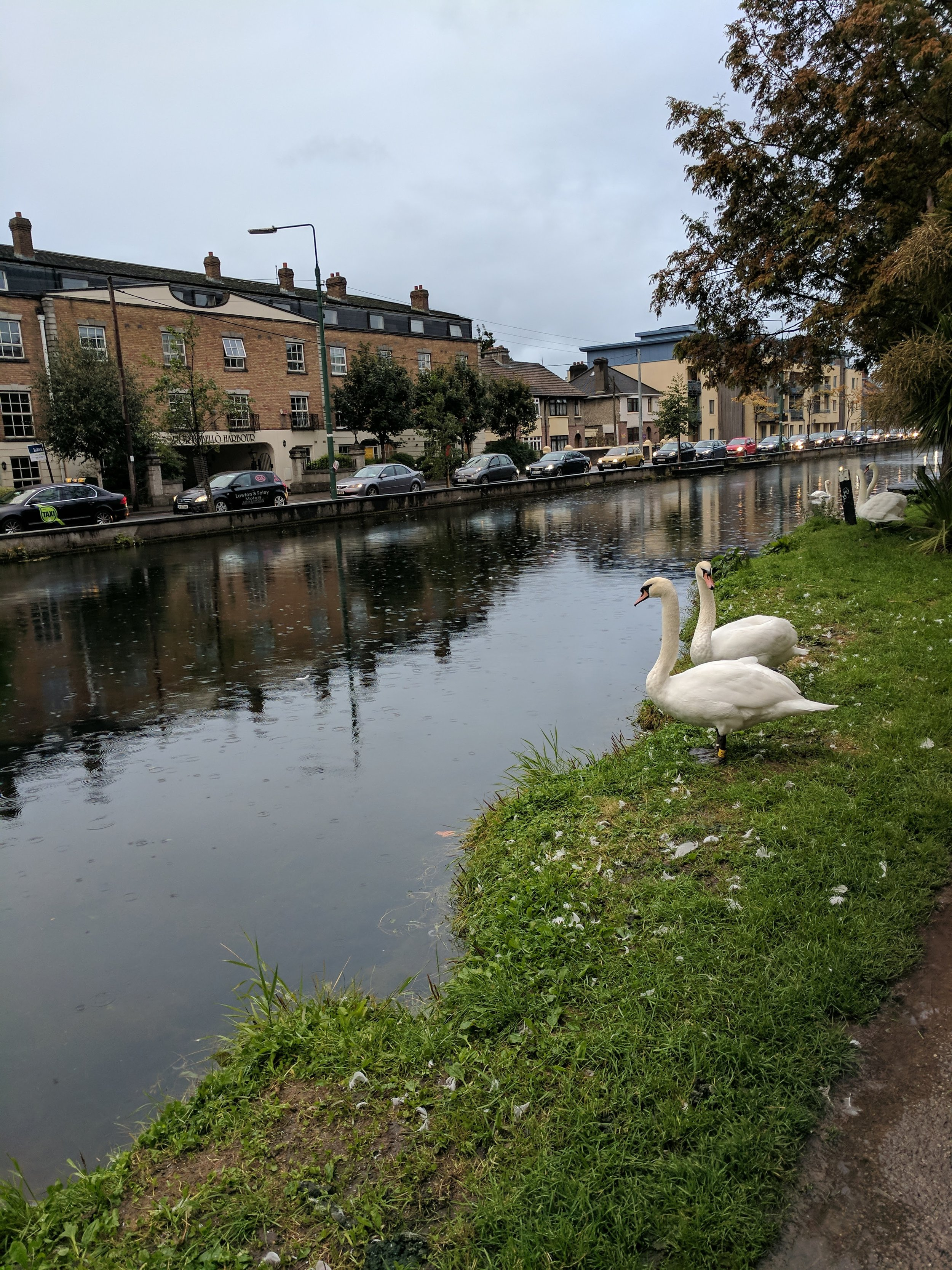 The swans were annoying me...