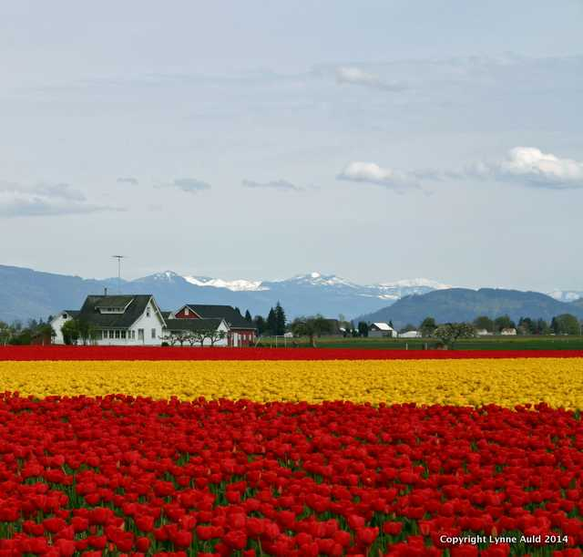 Skagit Valley home sq.jpg
