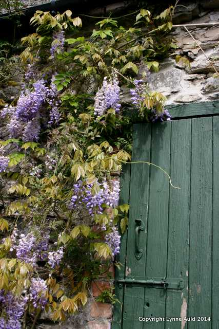 Wisteria green door big.jpg