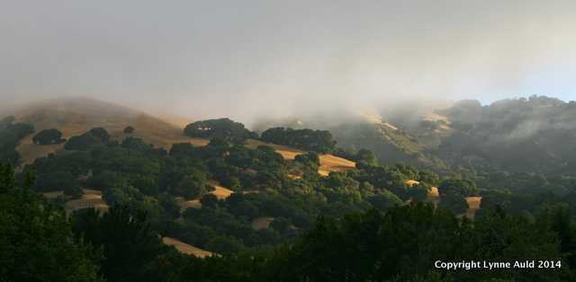 Foggy Morning, Lucas Valley