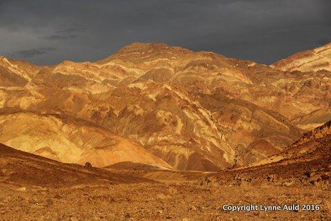 01-DV golden hills5.jpg