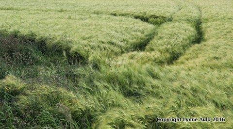 4-Windy field pan.jpg