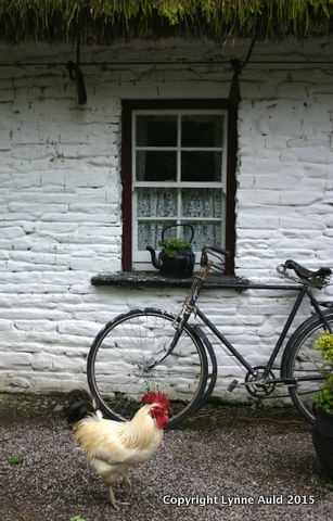 17-Rooster and bike.jpg