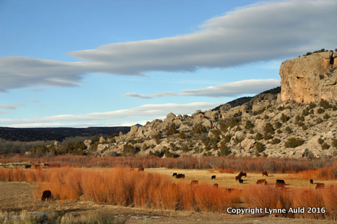 17-Cattle and mesa.jpg