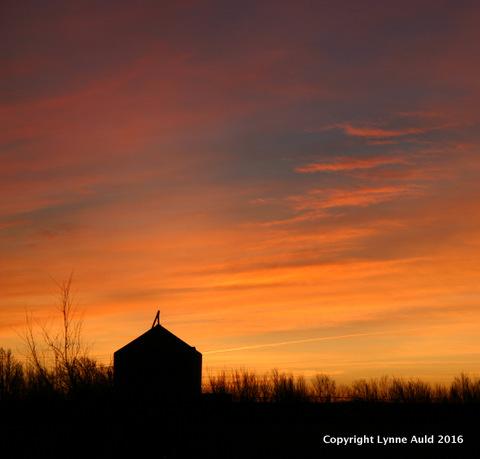 22-Texas sunrise sq.jpg