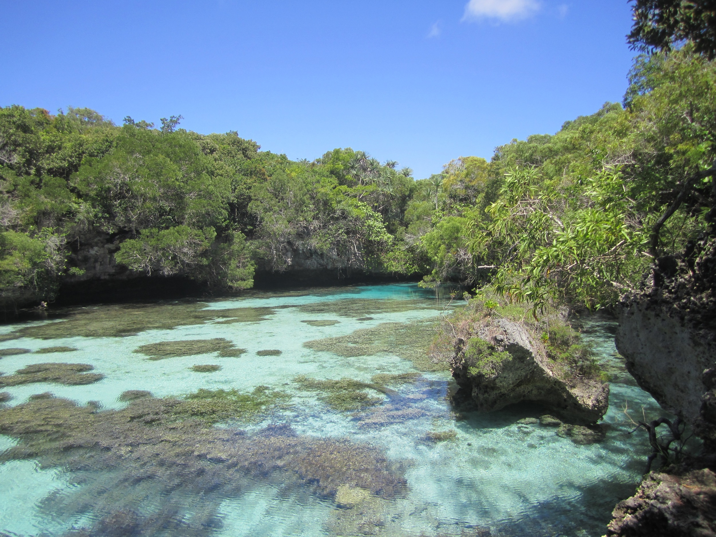 The  Aquarium Naturelle  on Maré is a shaded, coral-ringed natural pool filled with colorful tropical fish.
