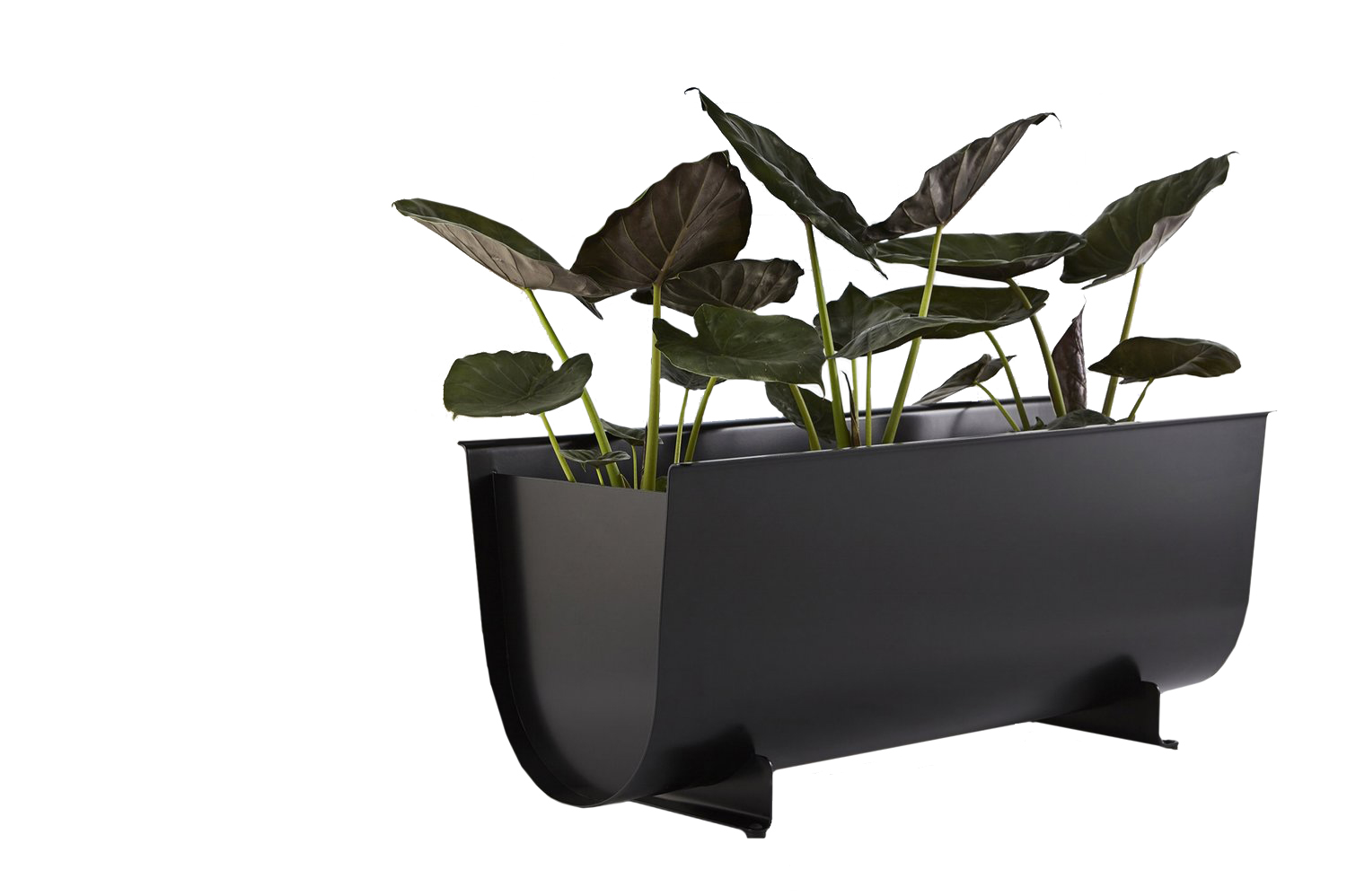 Julia has finally spied the perfect planter trough for apartment living that's not only classically timeless in style, but also very lightweight! Available at  Even Spaces .
