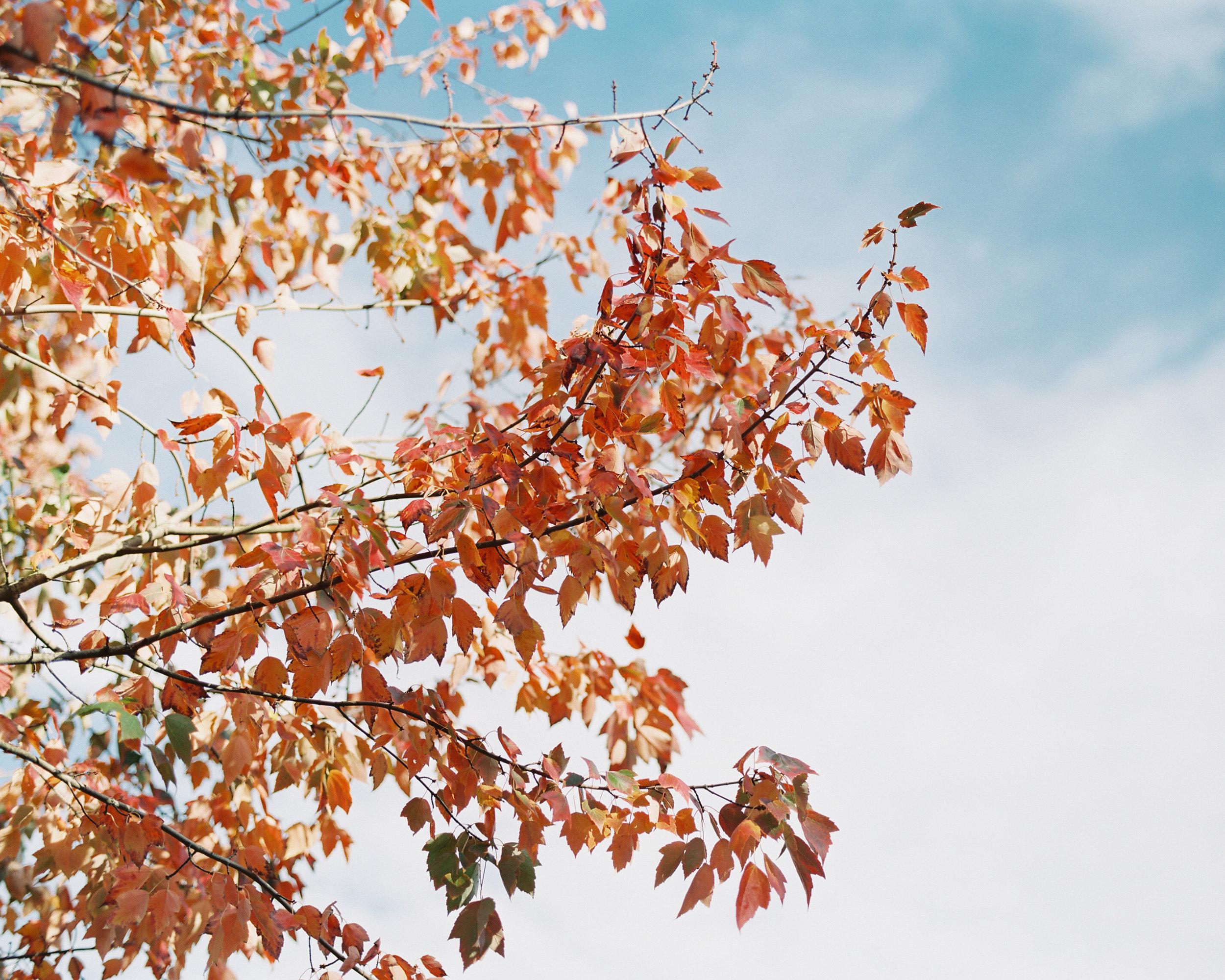 Portland-Oregon-Fall-Wedding-Photographer-4.jpg