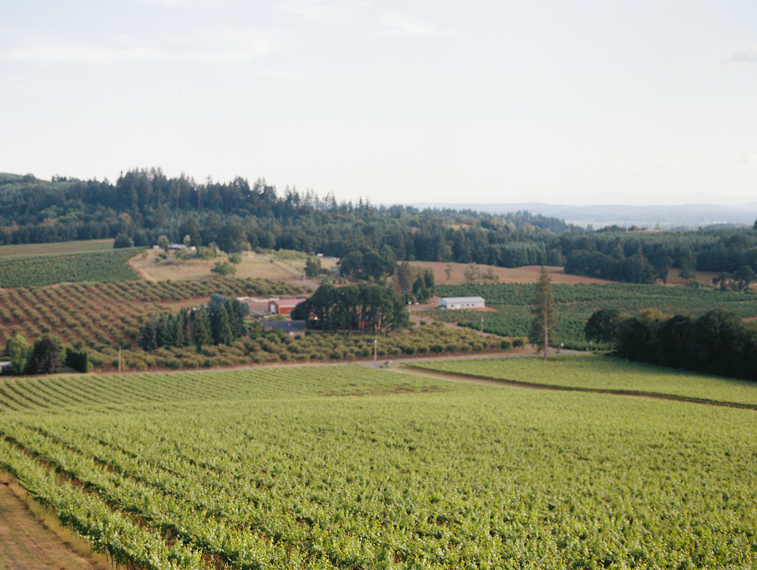 romantic-willamette-valley-vineyards-wedding-photography-33.jpg