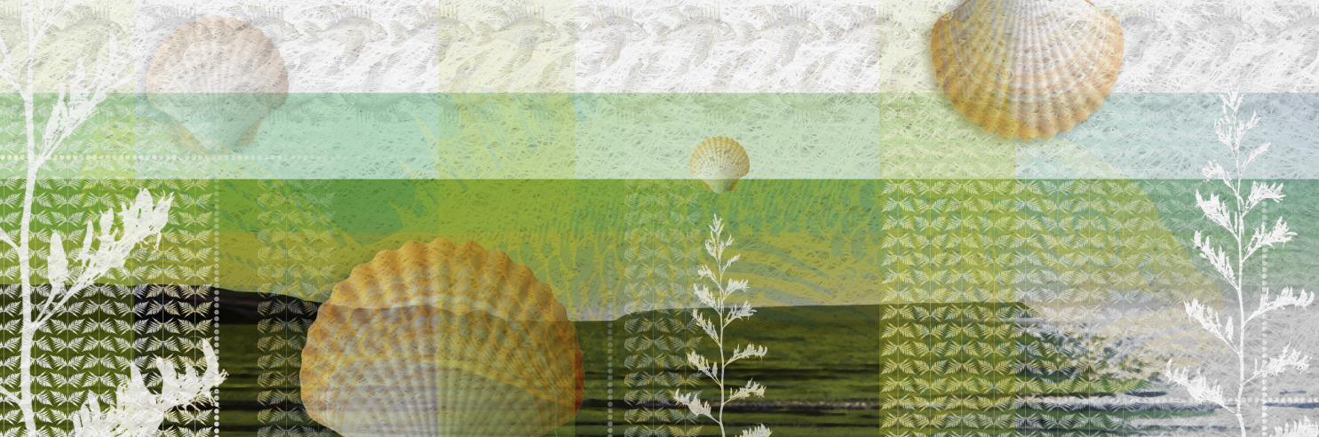 Seashell & Nature