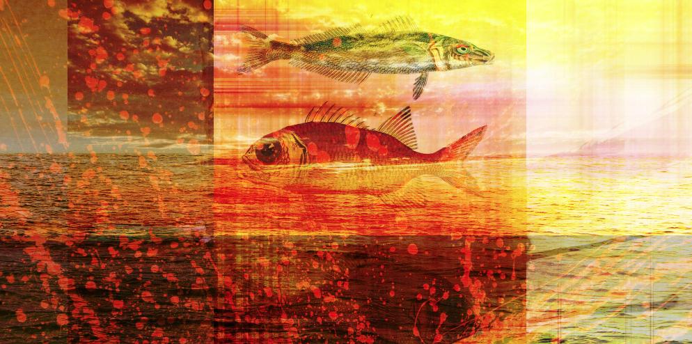 Sunset Fish Overlay