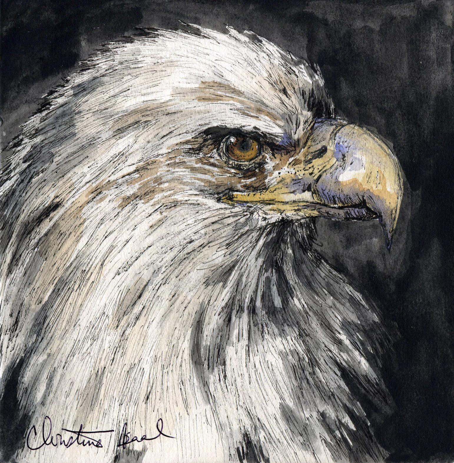 4. Bald Eagle