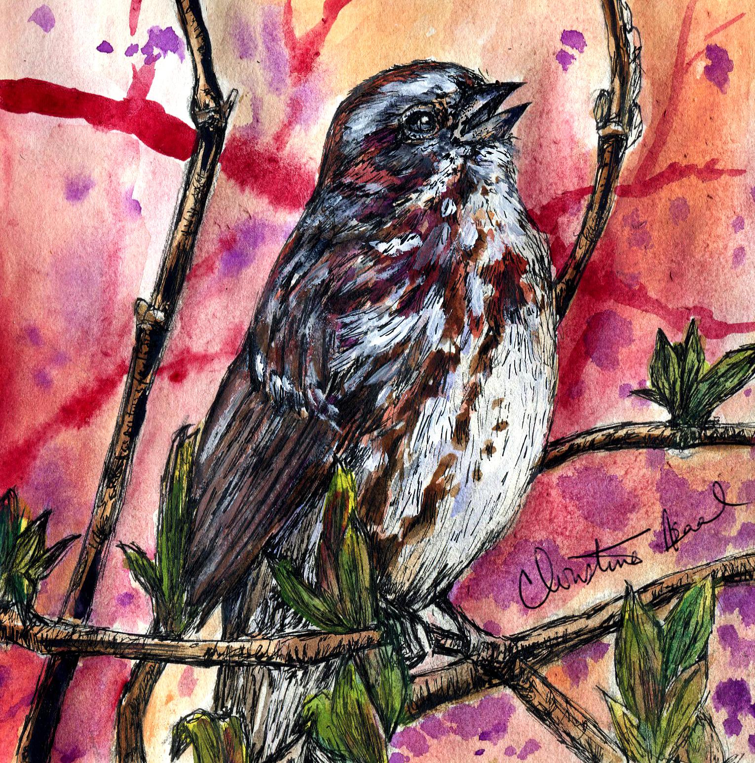 5. Fox Sparrow