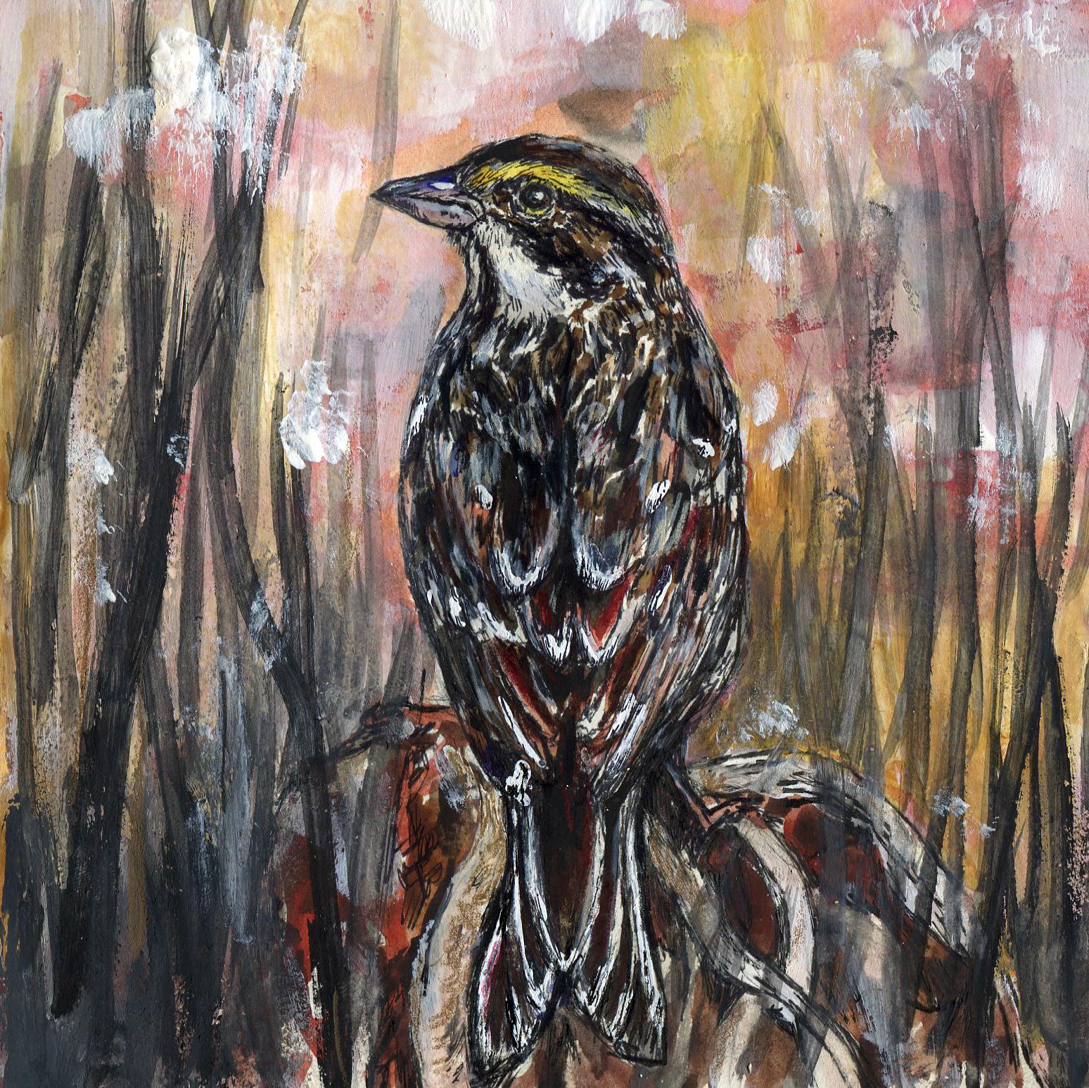 6. Savannah Sparrow