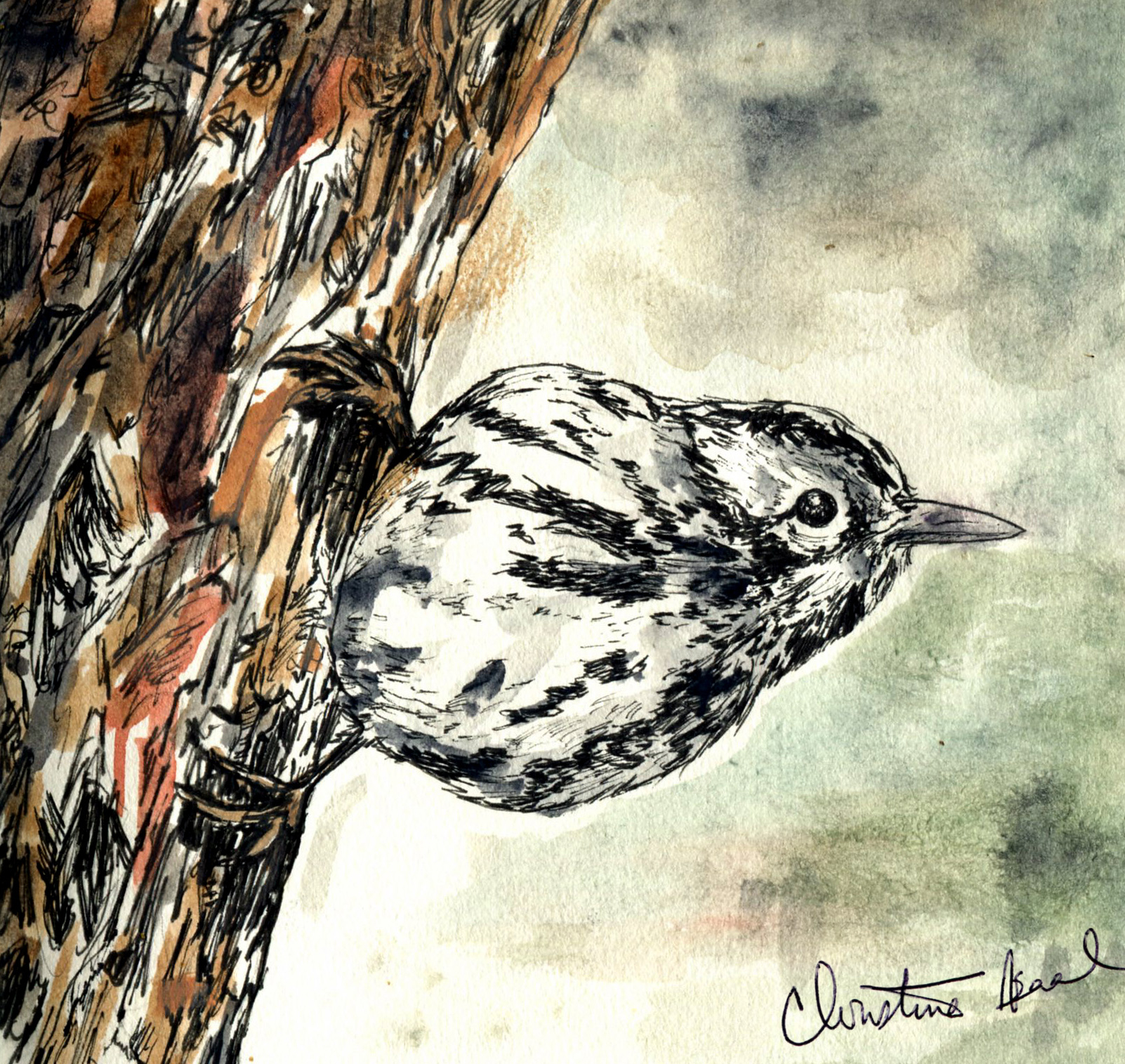 25. Black-and-white Warbler