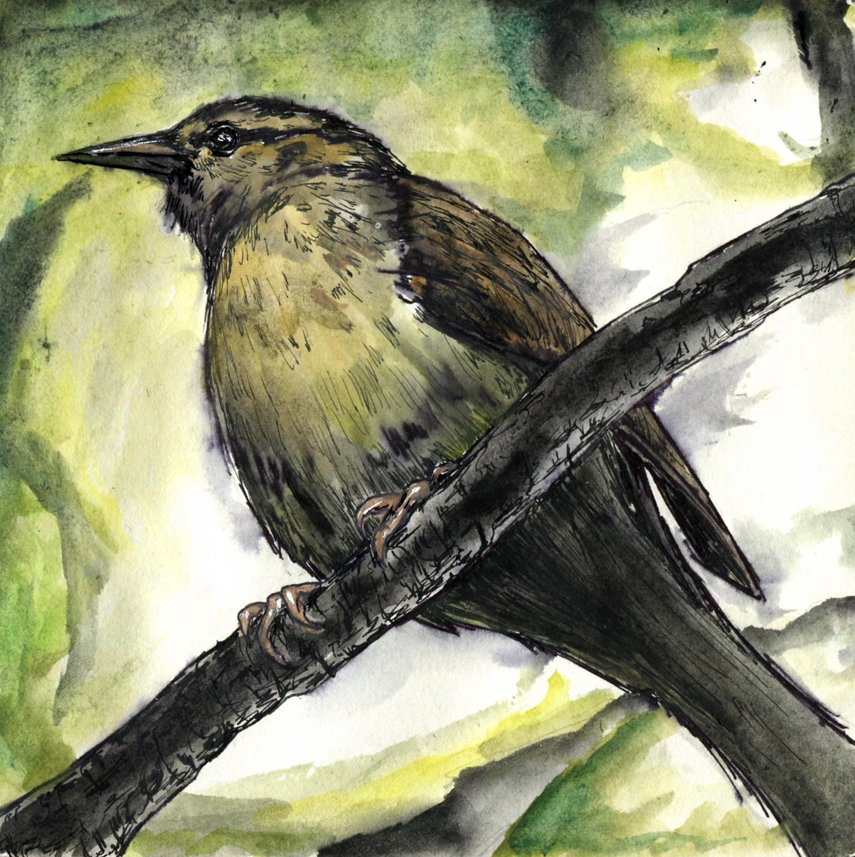 27. Worm-eating Warbler