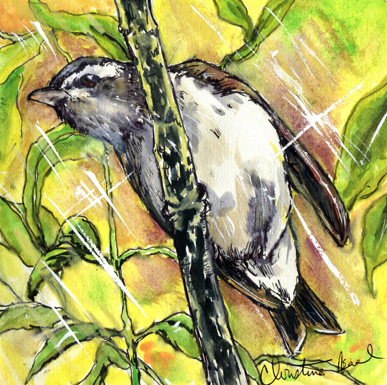 29. Red-eyed Vireo