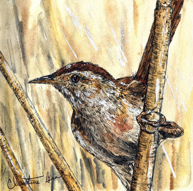 37. Marsh Wren