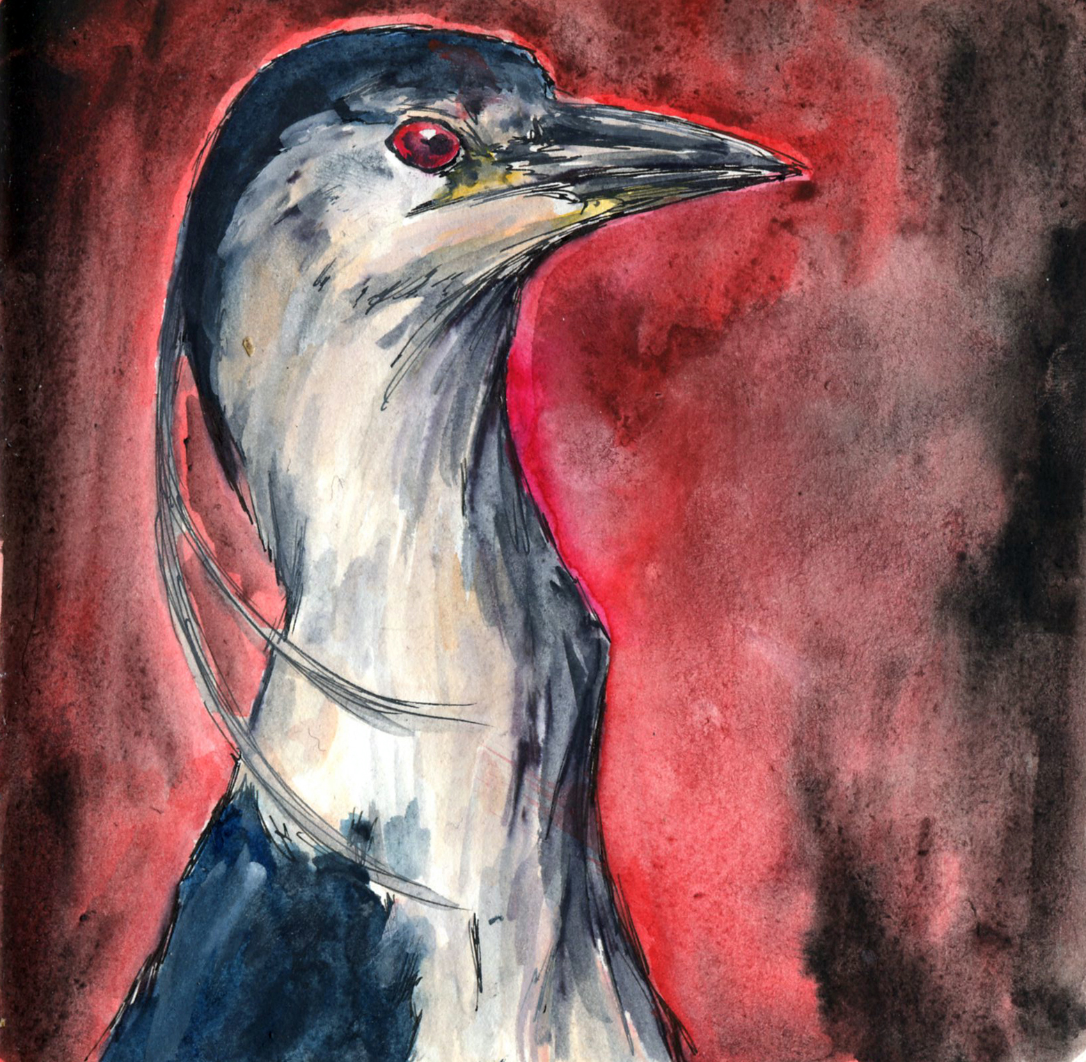 39. Black-crowned Night Heron
