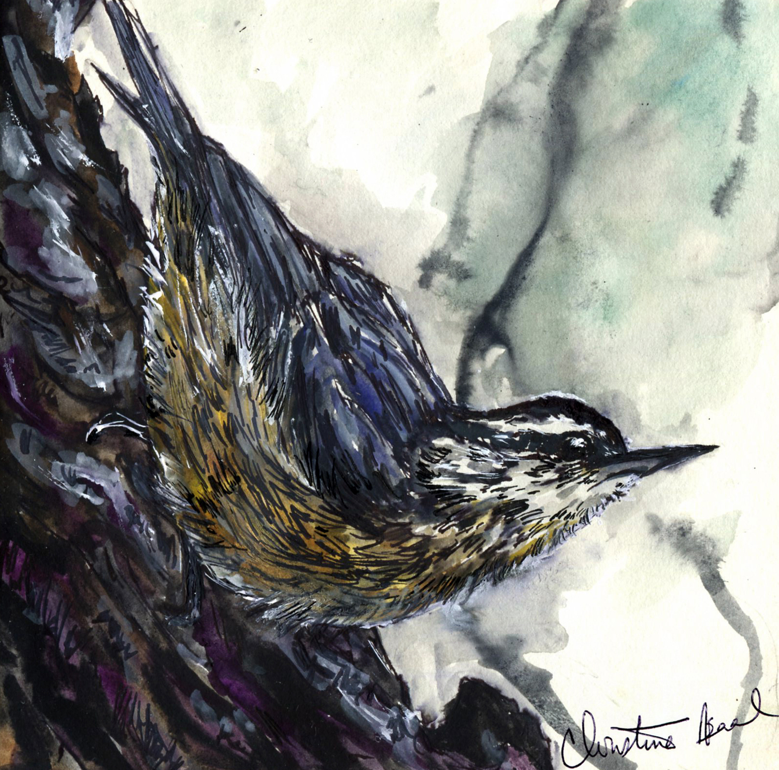 54. Red-breasted Nuthatch