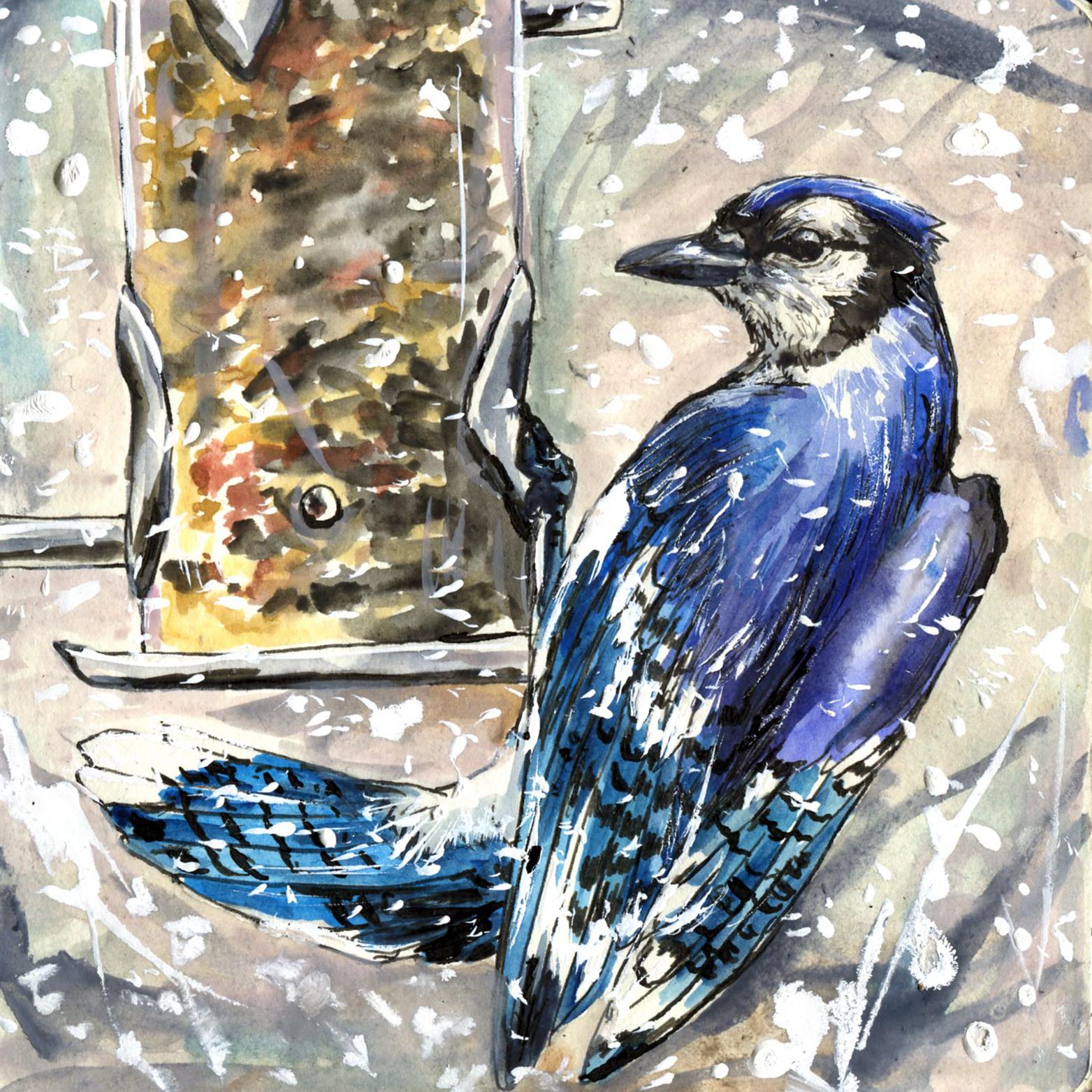 79. Blue Jay
