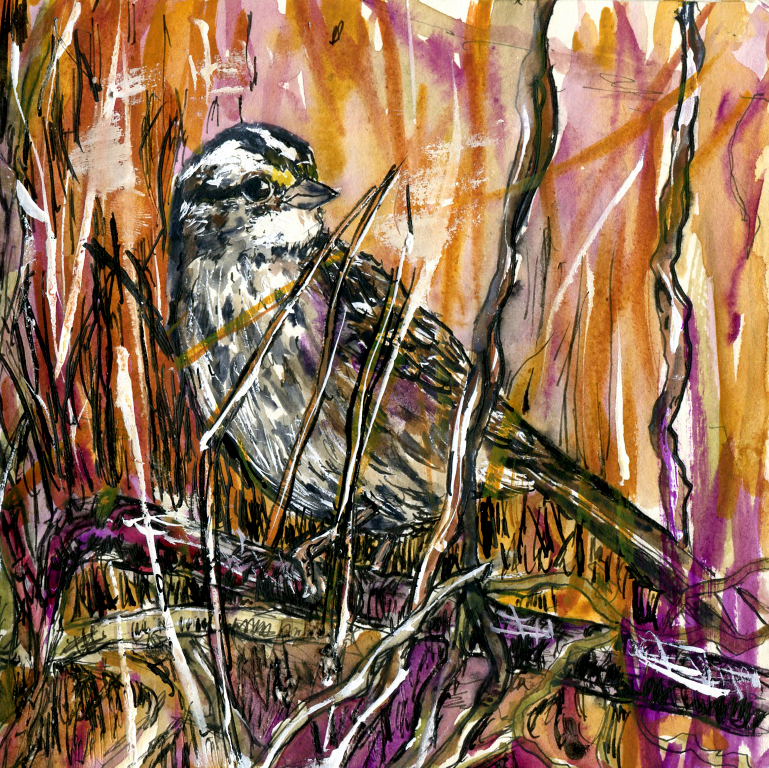 80. White-throated Sparrow