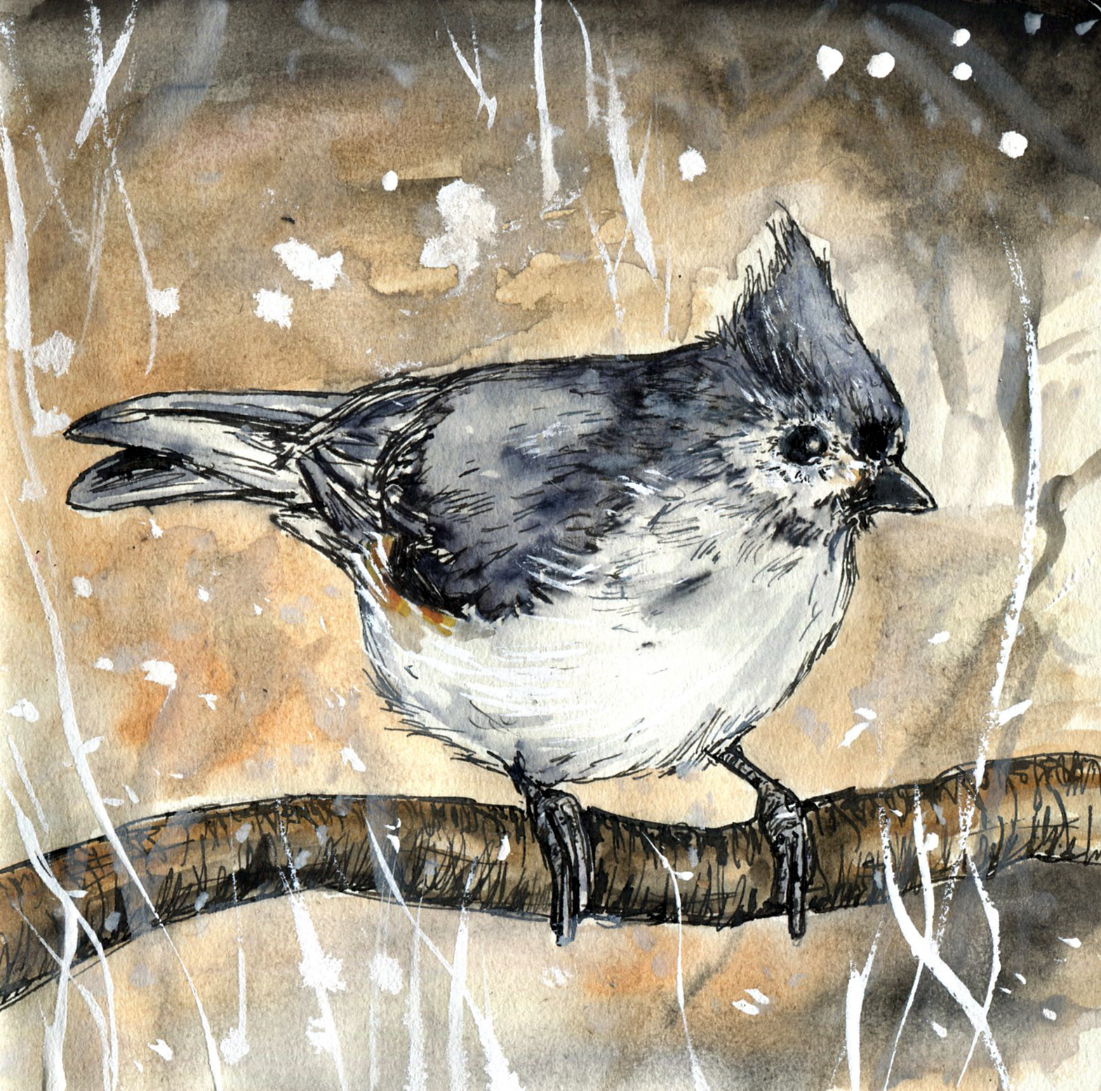 85. Tufted Titmouse