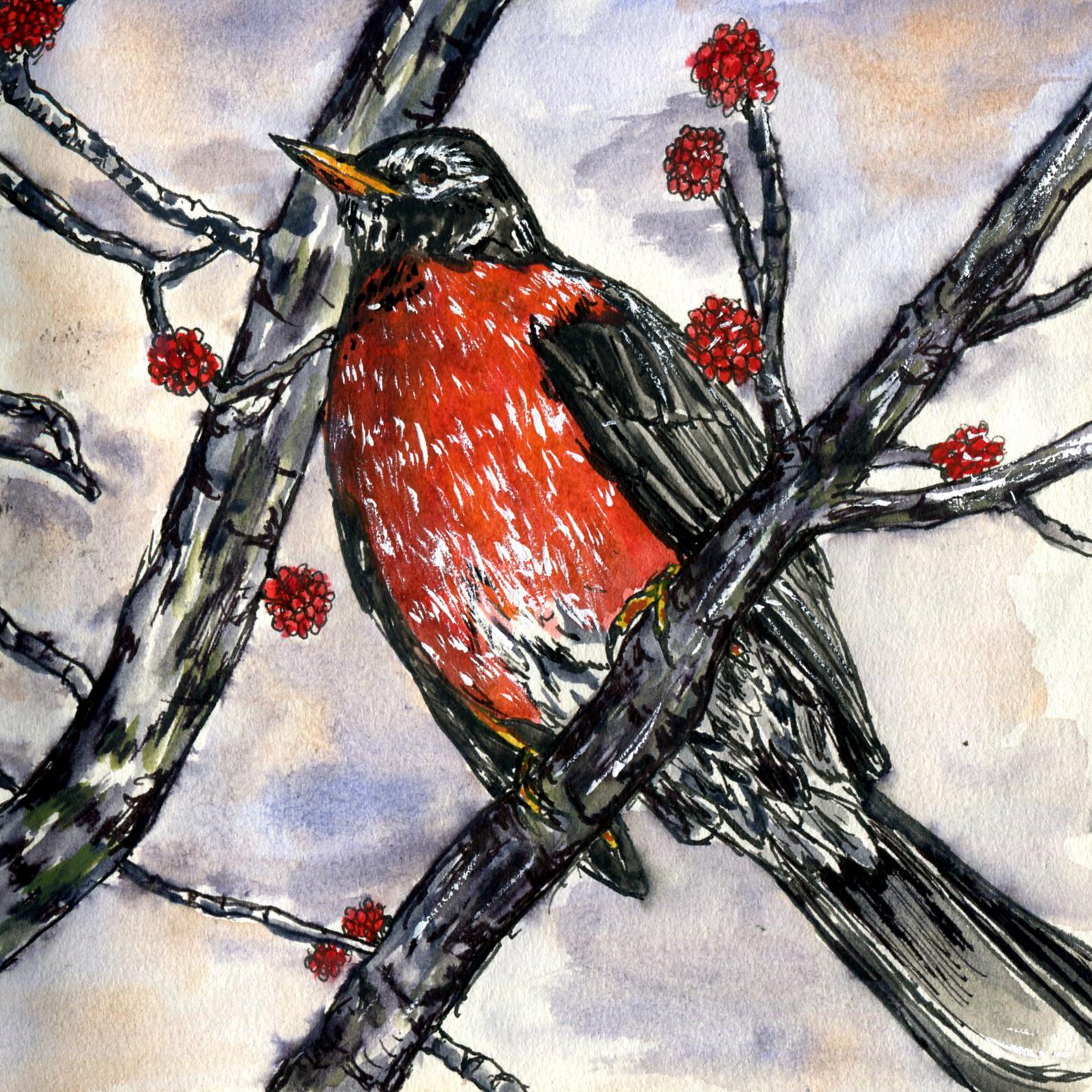 90. American Robin