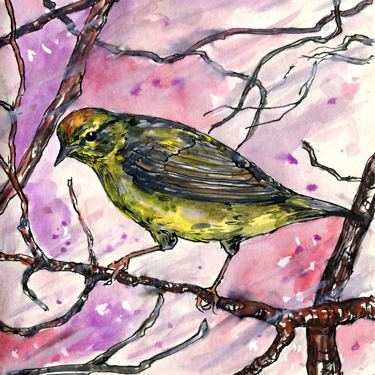 91. Orange-crowned Warbler