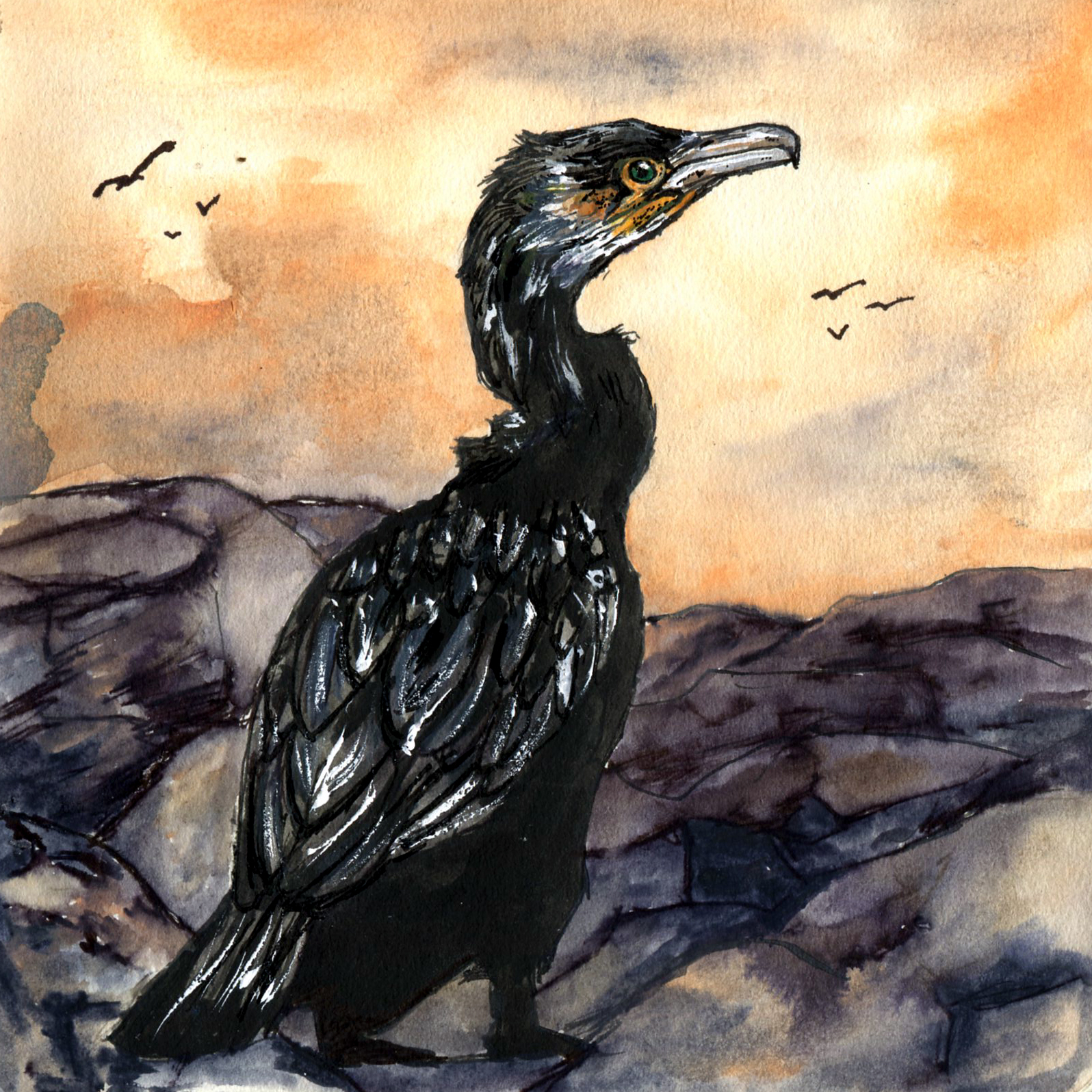 110. Great Cormorant