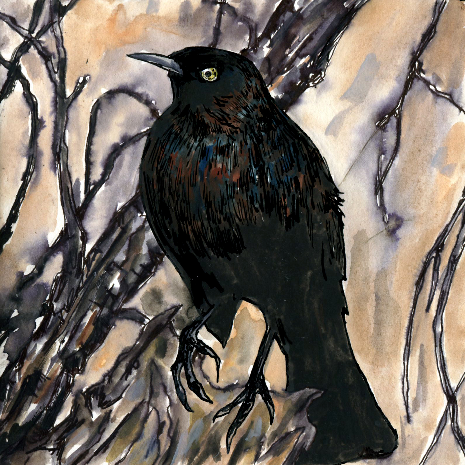 123. Rusty Blackbird