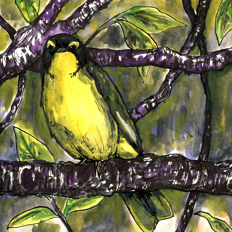 322. Kentucky Warbler