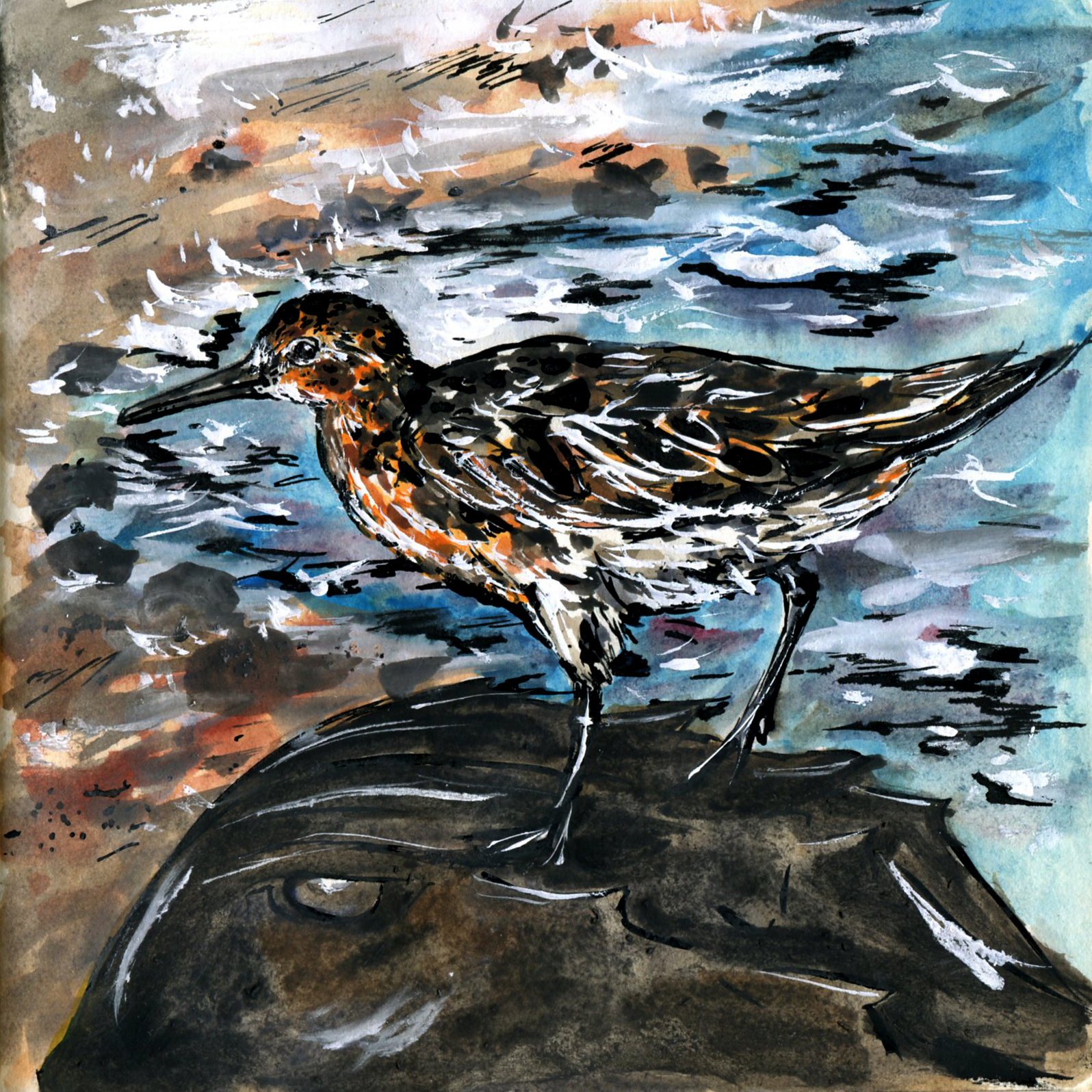 237. Red Knot