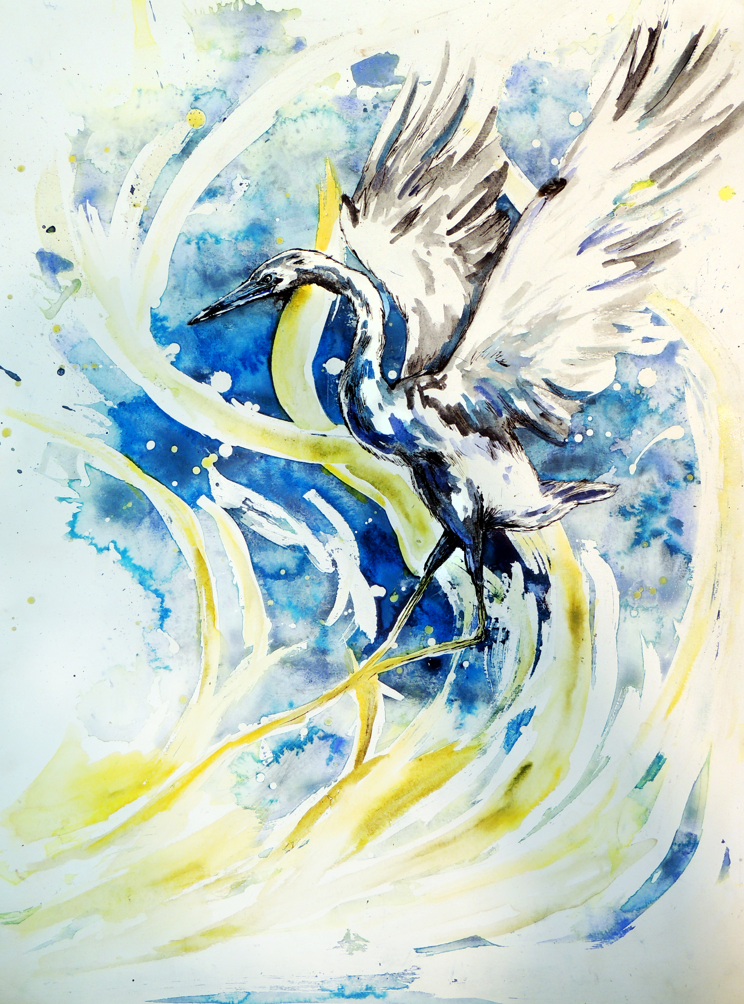 Little Blue Heron 2.jpg