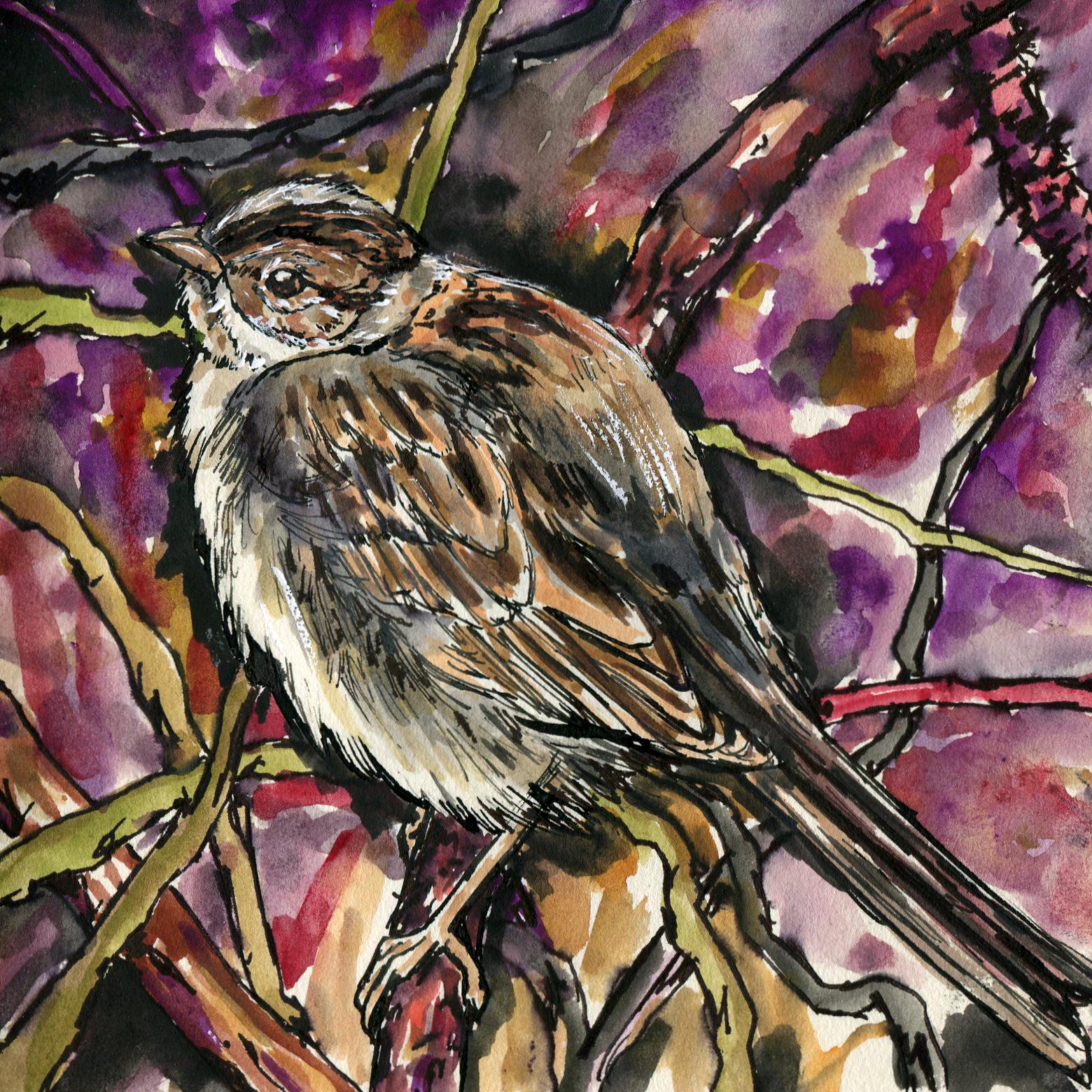 93. Clay-colored Sparrow