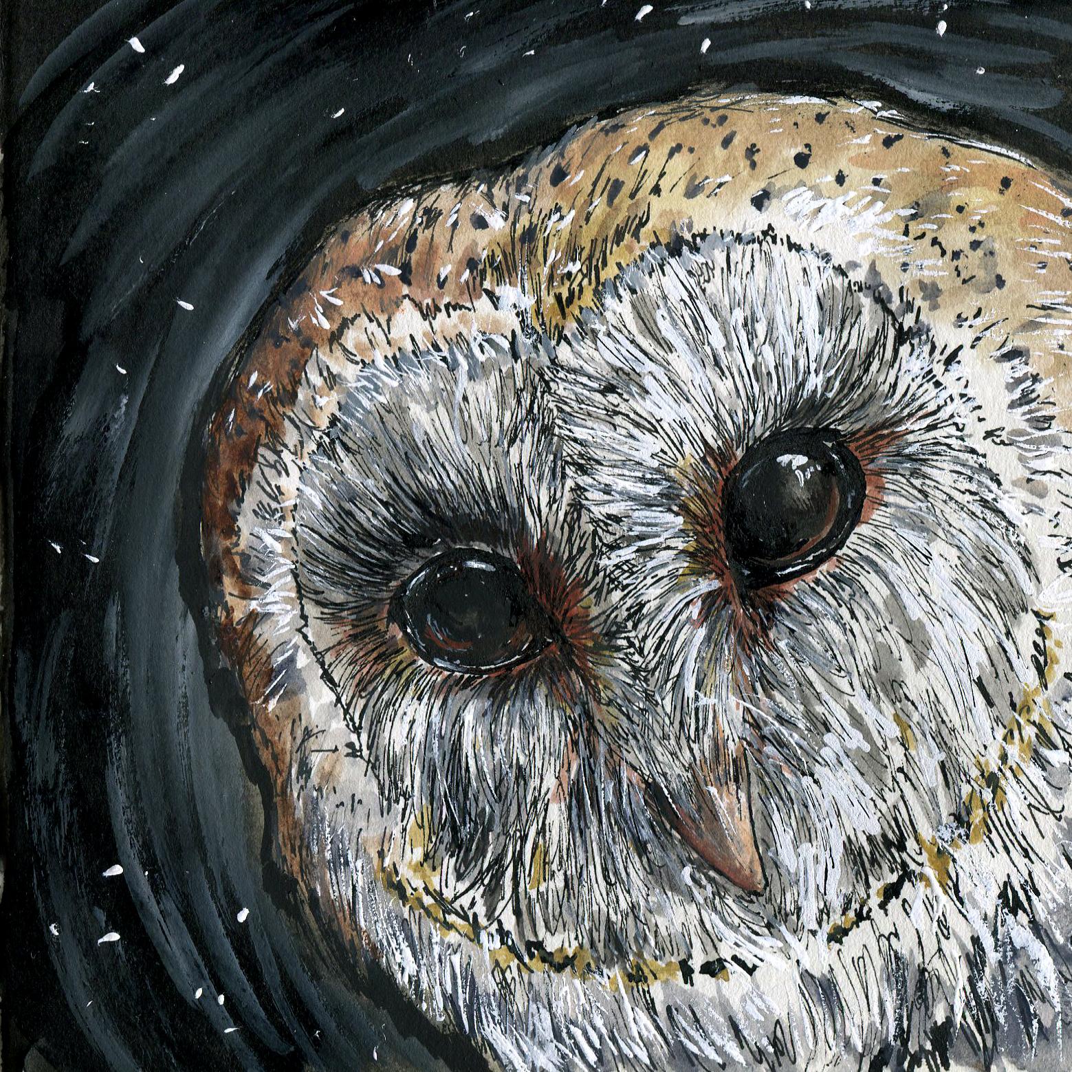 324. Barn Owl