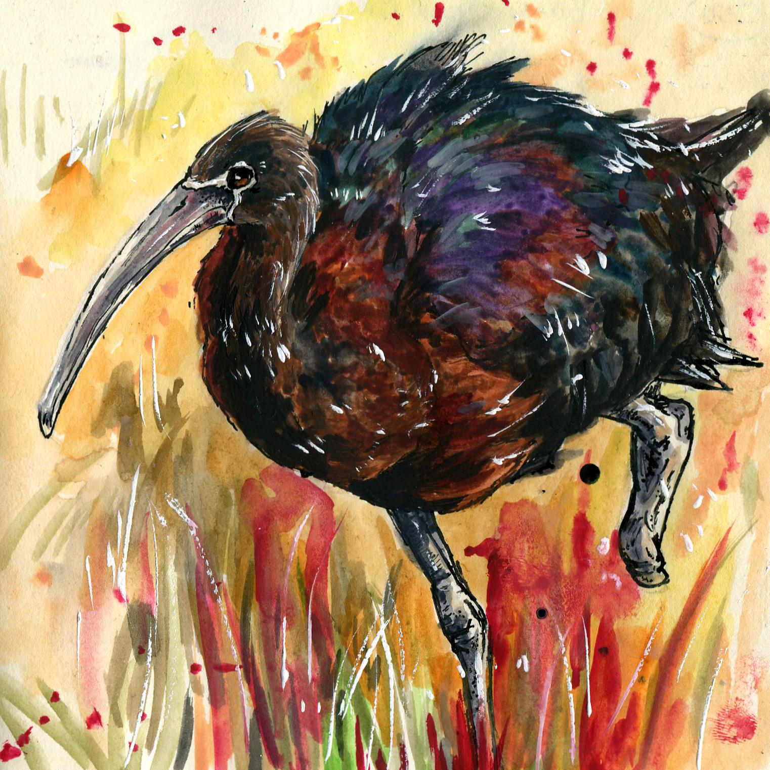 249. Glossy Ibis