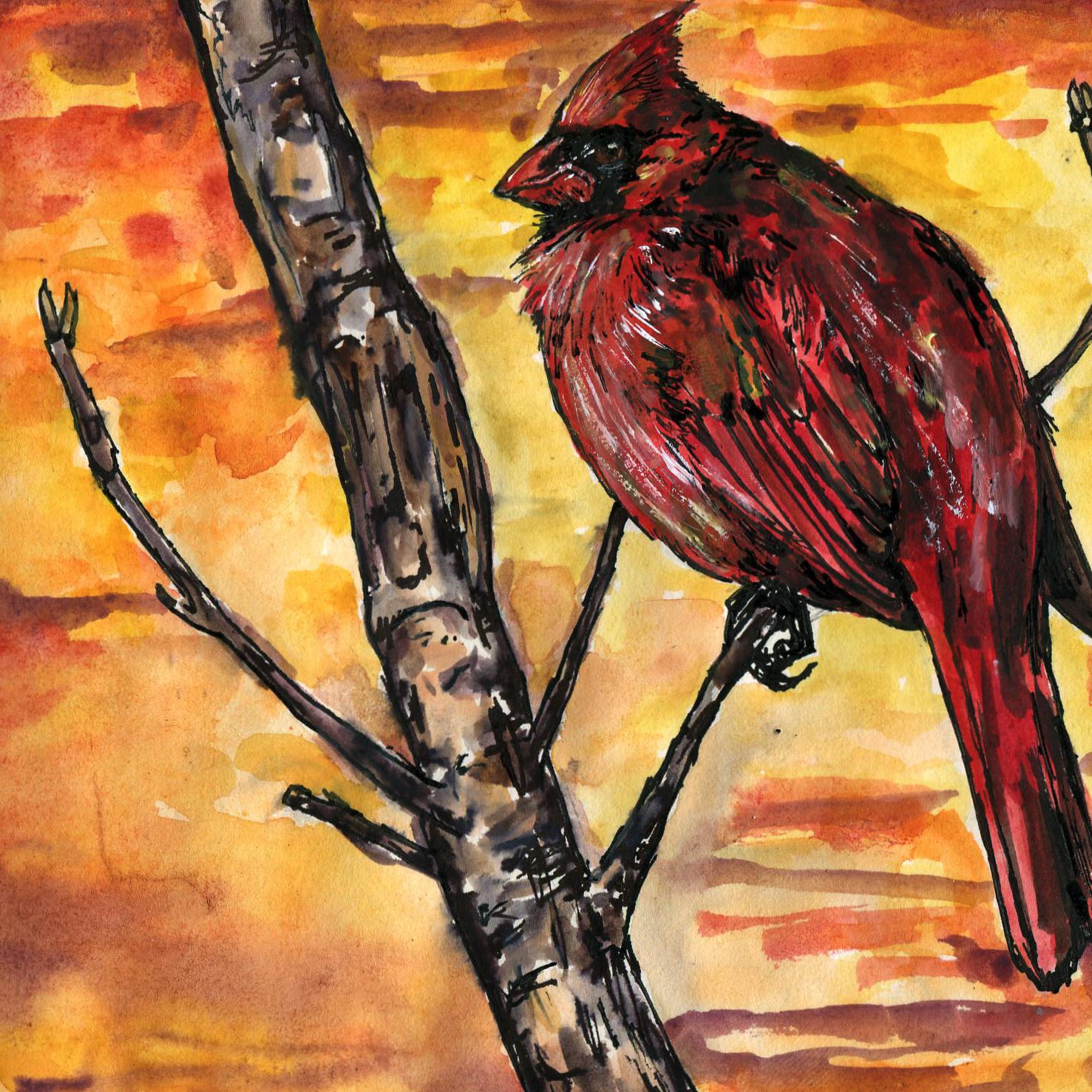 95. Northern Cardinal