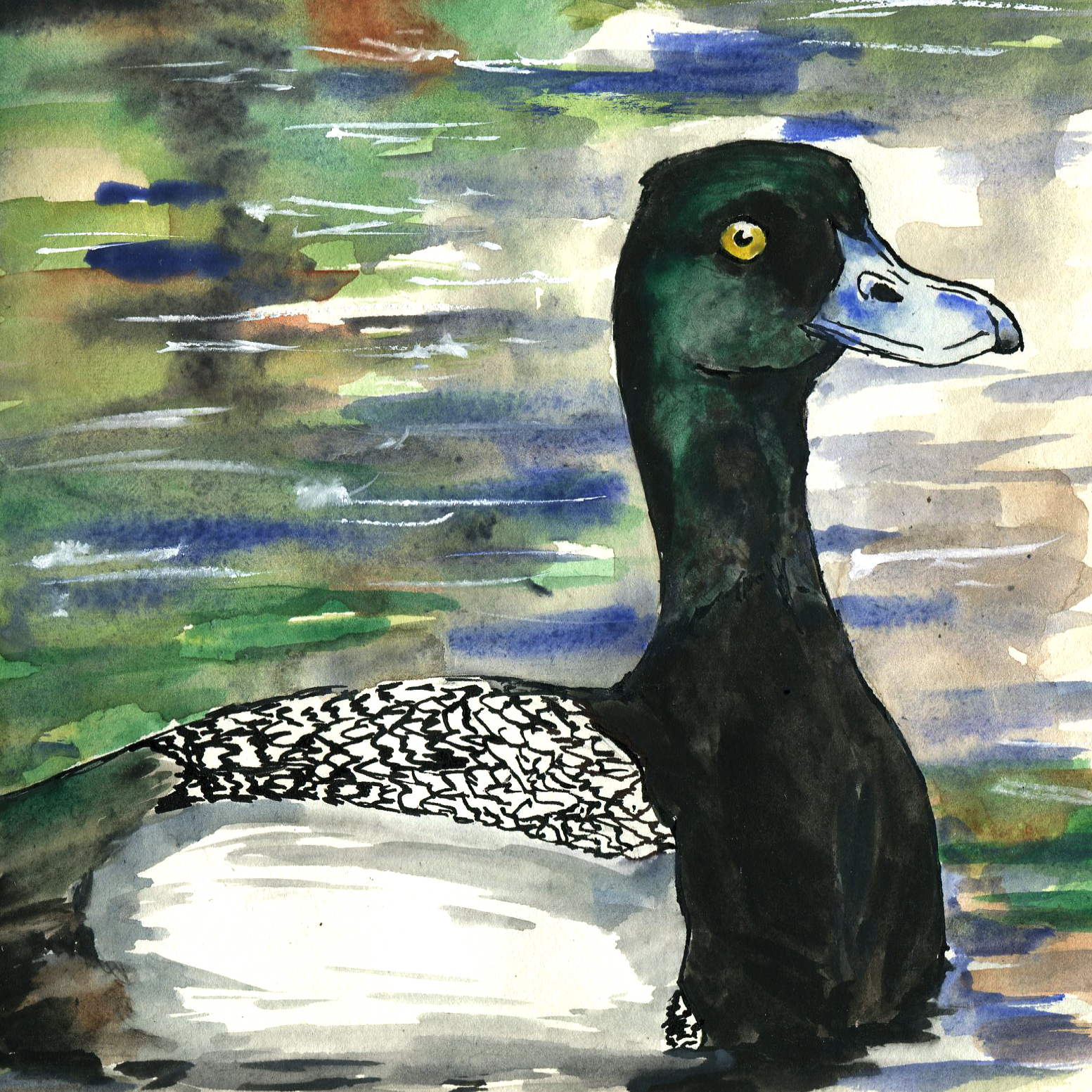 116. Greater Scaup