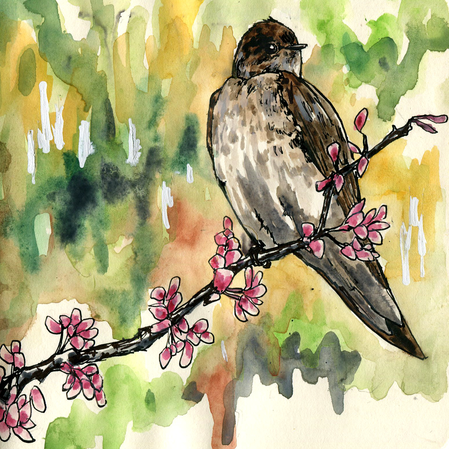 145. Northern Rough-winged Swallow