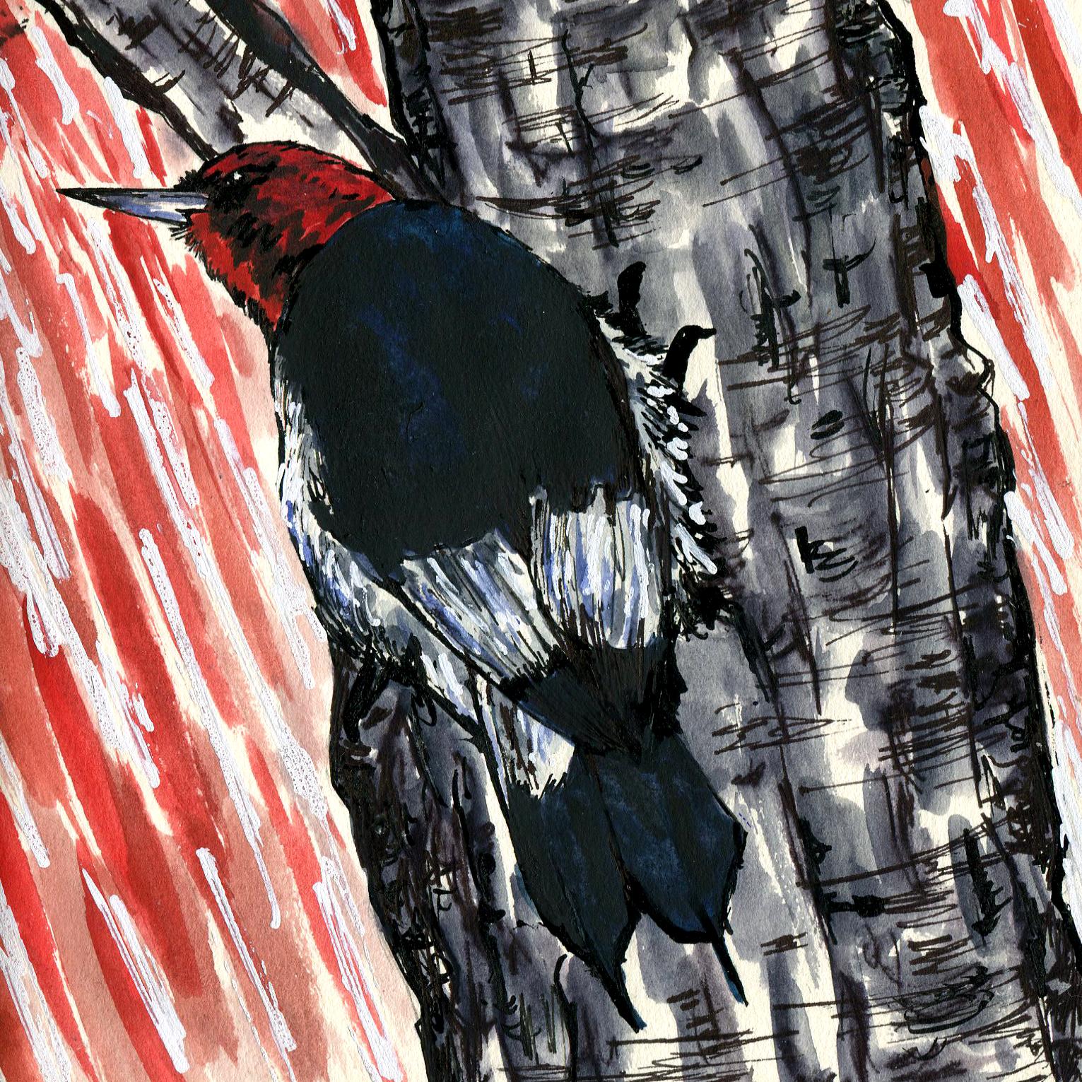 220. Red-headed Woodpecker
