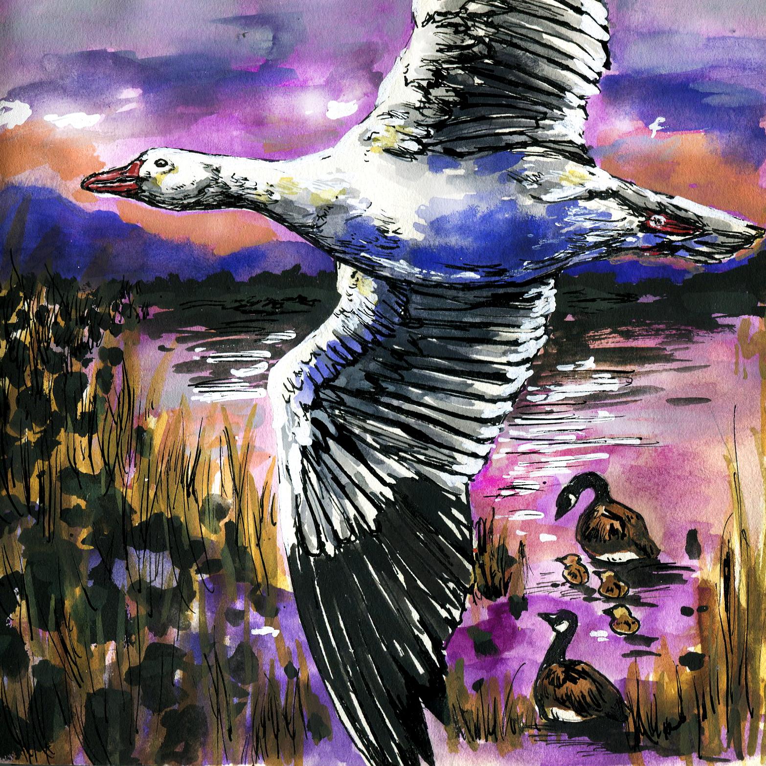 113. Snow Goose