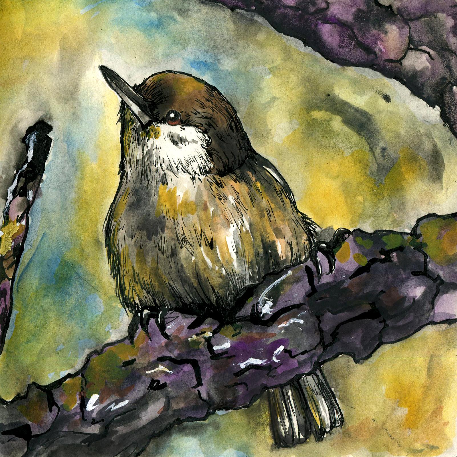 298. Pygmy Nuthatch