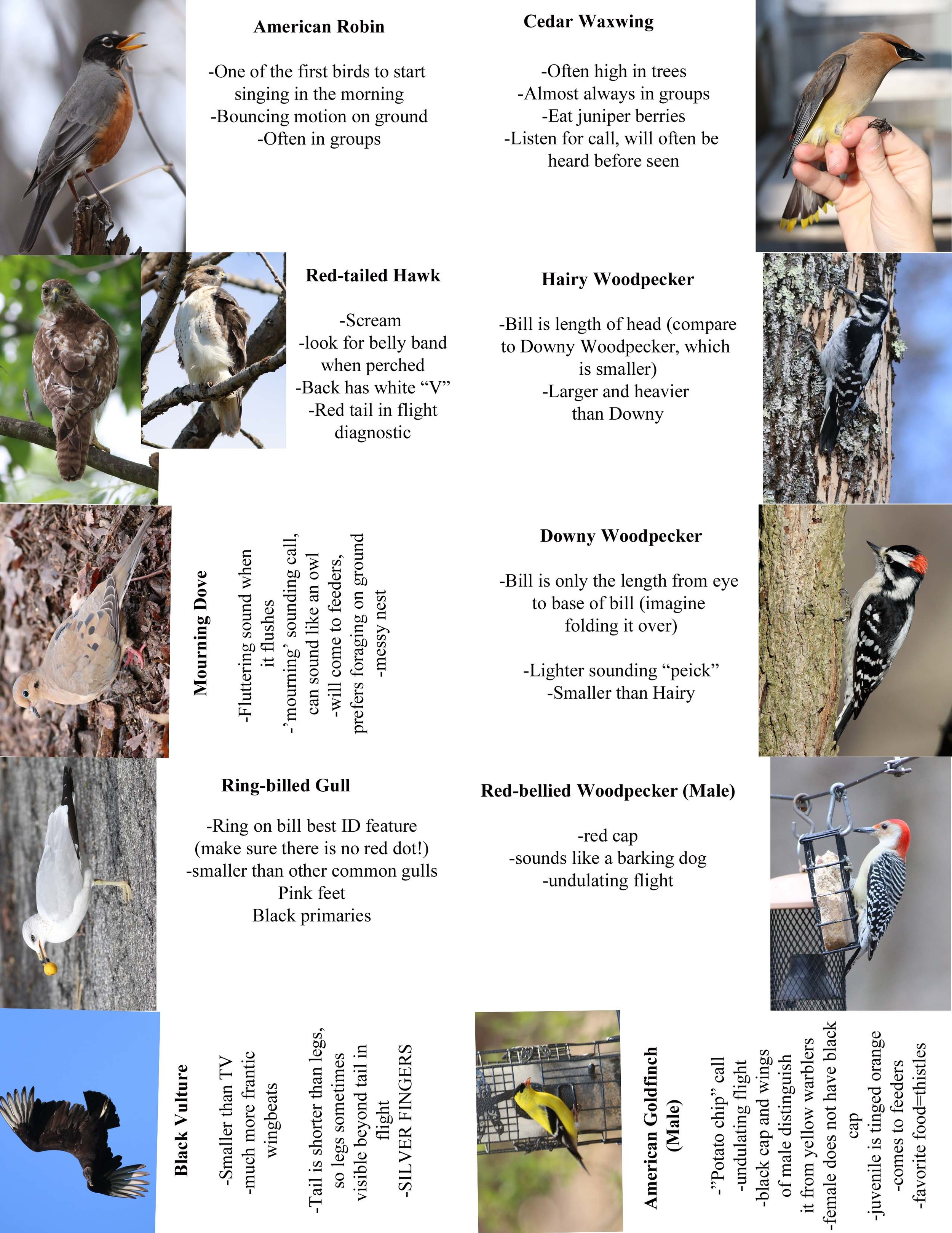 FC Birds2.jpg